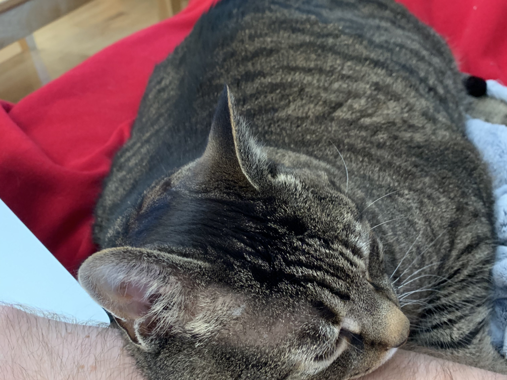 Pepper being supported by my arm
